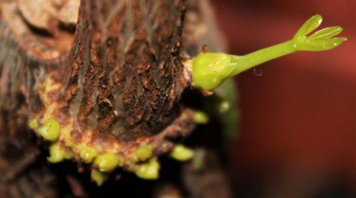 Fflanze gibt hand